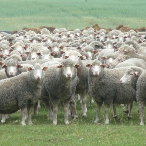 Herd Mentality – a social experiment exposes how quickly and readily people are manipulated to fall in line (Video)