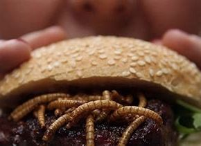 EU puts bugs on the menu…Will real food to be reserved for the elites?  You can bet on it.